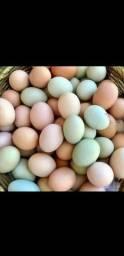 Ovos caipiras e frangos caipiras