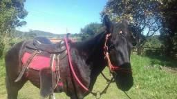 Cavalo Manga larga machador com quarto de milha