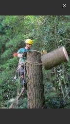 Corte de árvores