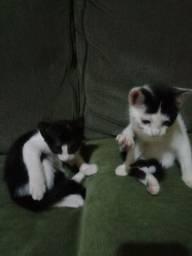 Gatinhos para adoçaõ,3 meses,vermifugados