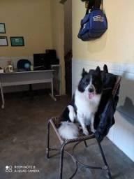 Título do anúncio: Adestramento em casa para educar seu dogs
