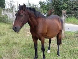 Cavalo de montaria