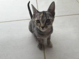 Doação de gatas -5 meses