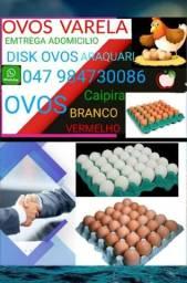 Vende se ovos em Araquari