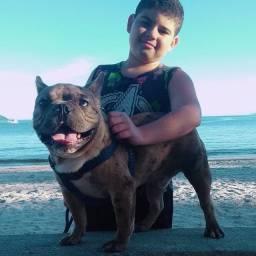 Vendo bulldog exótico macho lindão