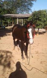 Vendo egua mansa Boa ein lida com gado