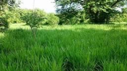 Fazenda 220 Alqueires Porto Nacional To