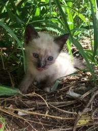Doa-se gatinhos (para realmente cuidar)