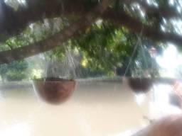 Orquidia na cabaça