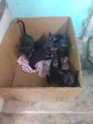 Esses 5 gatinhos precisam de um lar