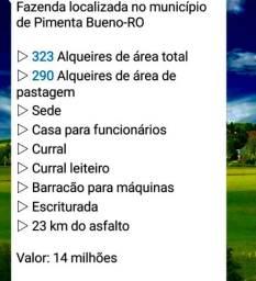 Fazenda 323 alqueiro formada