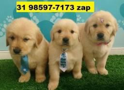 Canil Filhotes Cães Premium BH Golden Boxer Labrador Dálmata Pastor Rottweiler