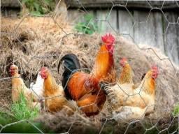Título do anúncio: Tela galinheiro 1,5 por 50 metros fios 22 R$ 318,00