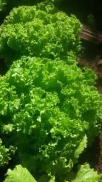 Horta e varejo alface,rúcula,lameirao, cebolinha salsinha,Couve
