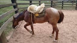 Cavalo Crioulo Gateado Rosilho Ruivo