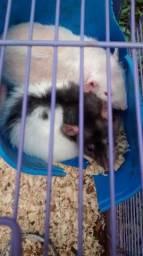 Ratos Twister - Doação