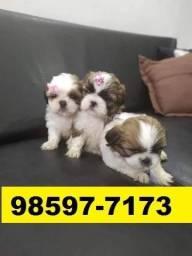 Canil Filhotes Líder Cães BH Shihtzu Lhasa Yorkshire Maltês Basset Poodle