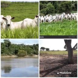 Fazenda 140 hectares 28 alqueires abaixou para 219 mil