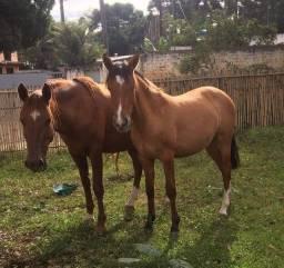 Cavalos mãe e filha