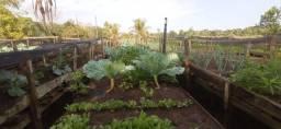 Título do anúncio: Hortaliças, Legumes e Verduras