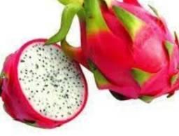 Vendo mudo de pitaya