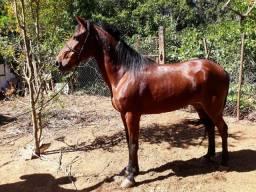 Cavalo pra vende  barato