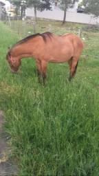 Égua bem domada pra vender logo
