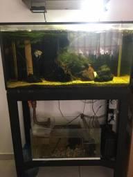 Aquario 200 litros completo