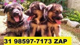 Canil Os Melhores Filhotes Cães BH Pastor Rottweiler Golden Dálmatas Akita Labrador