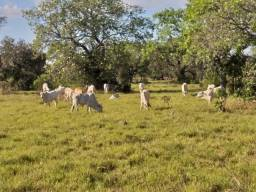 Título do anúncio: Fazenda 1.446 há (298 alq) dupla aptidão Vale do Araguaia