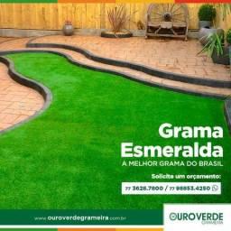 Grama Esmeralda Melhor Preço Mercado Entregamos Todo Brasil