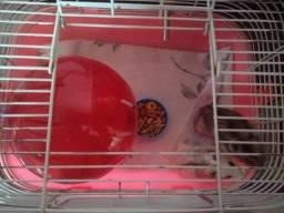 Hamster macho e fêmea
