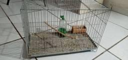 Gaiola para aves nova