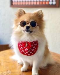 Óculos pet