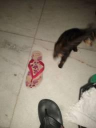 ? gato para adoção de Olinda casa caiada