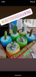 Suculentas e cactus R$10