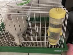 Vendo coelho doméstico