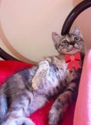 Adote um gatinho (adoção responsável)