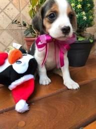 Título do anúncio: Filhotes disponivel de beagle venha conferir 13 polegadas