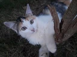 Estou doando 2 gatinhas...