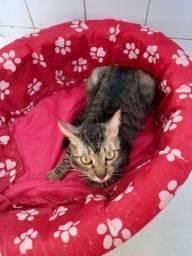 Doação Gato Castrados