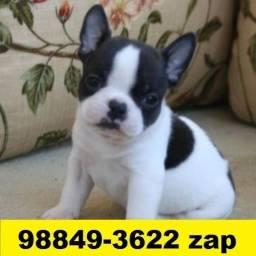 Canil Filhotes Cães Líder BH Bulldog Francês Lhasa Maltês Beagle Shihtzu Yorkshire