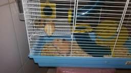 Hamster sírio com gaiola dois andar