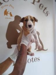 Bull Terrier Inglês somos a unica rede com clinicas veterinarias