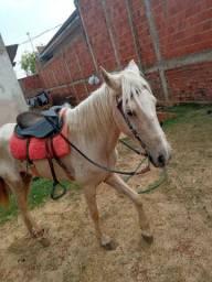 Gambiro egua