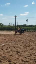 Vende-se cavalo manso de direita