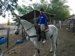 Cavalo 6 anos