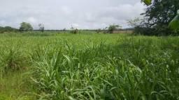 Sitio com 65 hectares no Cantá/RR, ler descrição do anuncio