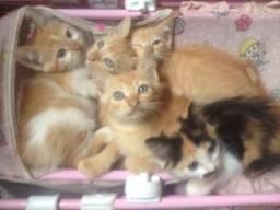 Doa se filhotes de gato.gato não é de raça, mas pode lhe proporcionar muito amor.2 meses