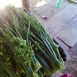 Cheiro verde barato 60 cetavos